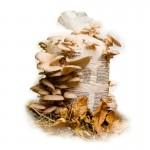 BIO Hliva hubový mycéliový substrát, vrece 15 l